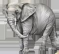 Шри Ланка  слон